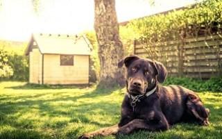 Содержание собаки на загородном участке - дело тонкое