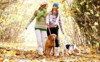 Прогулки с собакой: правильные советы