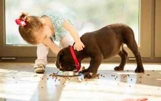 Правила кормления щенка